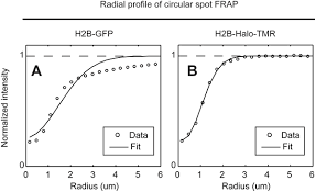 design criteria tmr photoswitching free frap analysis with a genetically encoded