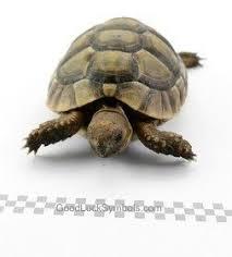 tortoise symbolism turtle symbolism