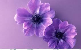 Cute Flower Wallpapers - hd wallpapers purple flower wallpaper border desktop flowers