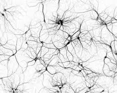 neuron i would really like to get this as a tattoo maybe thigh