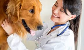 brookdale animal hospital located in brooklyn park mn has been