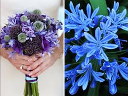 wedding flowers blue may flowers 20 best flowers in season in may for your wedding