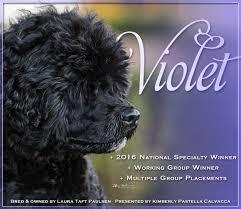 bluetick coonhound westminster westminster kennel club hound best of breed list u2013 monday