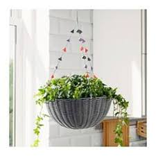 Ikea Hanging Planter by Crassula Potted Plant Money Tree Plants Ikea Shopping And Gardens