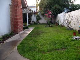 astounding small trees for backyard privacy pictures decoration
