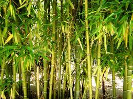 wood flooring information simplefloors news natural bamboo grass