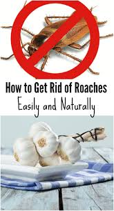 How To Get Rid Of Cockroaches In Kitchen Cabinets by How To Get Rid Of Roaches Easily And Naturally Jpg