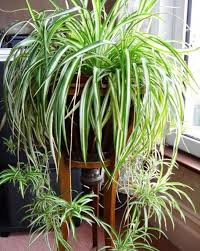 house plants that don t need light 10 plants that don t need sunlight to grow decorative planters