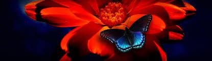 butterflies free web headers