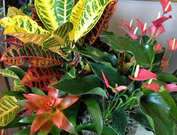 easy houseplants to care for indoor easy outdoor green plants