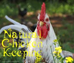 Backyard Chicken Magazine by Chicken Keeping