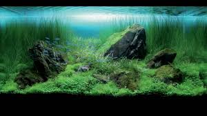 Beautiful Home Fish Tanks by Really Amazing Fish Tanks Youtube