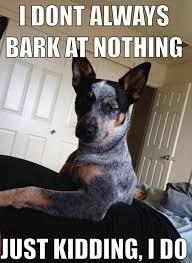 Annoyed Dog Meme - how many barks does a nuisance dog make the science dog