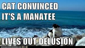Manatee Meme - animal capshunz manatee funny animal pictures with captions
