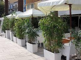 balkon bambus sichtschutz bambus im kübel kann eine terrasse im garten oder einen balkon mit