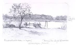 wild persimmon tree along the wicomico river maryland pencil