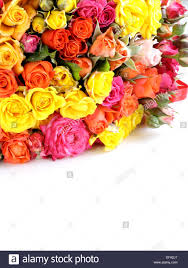 different color roses different color roses yellow pink may be used as the stock