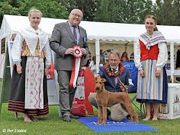 affenpinscher uppf are värmlands kennelklubb internationell hundutställning 2017