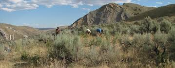 plants native to washington state five things you didn u0027t know about sagebrush u2013 institute for