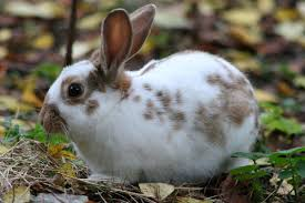 family pet and garden center domestic rabbit wikipedia