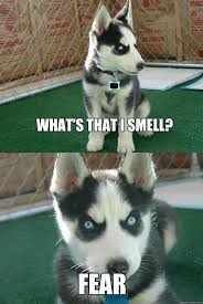 Fear Meme - what s that i smell fear insanity puppy quickmeme