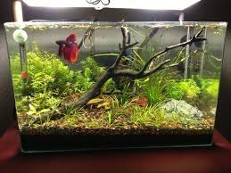 Best Substrate For Aquascaping 328 Best Aquascaping Images On Pinterest Aquarium Ideas