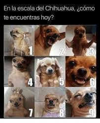 Memes De Chihuahua - en la escala del chihuahua ccomo te encuentras hoy chihuahua meme