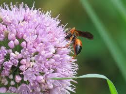 honey bees backyard and beyond