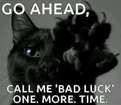 Good Luck Cat Meme - pin by dixie williams on cats pinterest
