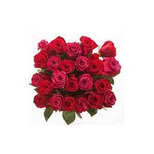 cheap roses send cheap roses to india send cheap roses to chennai fresh
