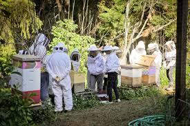 it u0027s bee season classes and more in 2016 mountain feed u0026 farm