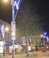 christmas lights no it s the wagtail tree hundreds of roosting