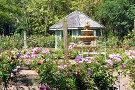 rose garden photos from leu gardens in orlando