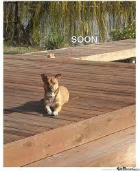 Soon Cat Meme - cat photobomb soon by wahranelo meme center