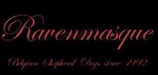 belgian shepherd ottawa ravenmasque belgian shepherds