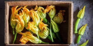 cuisiner les fleurs comment cuisiner les fleurs de courgettes