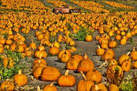 halloween u0026 pumpkin season visit half moon bay