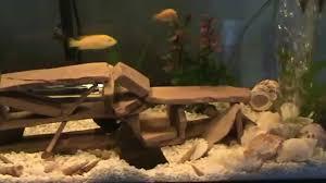 idee deco aquarium decoration artisanale d u0027aquarium pour cichlides africain youtube