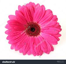 pink flower wallpaper of pink flower 2462 hdwarena