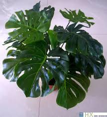 best indoor tree plants to buy buy new indoor tree plants