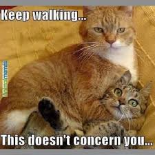 Funny Cats Meme - wordless wednesday funny cat memes ww moms own words