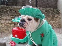 English Bulldog Halloween Costumes Baggybulldogs English Bulldogs Bulldog Fun