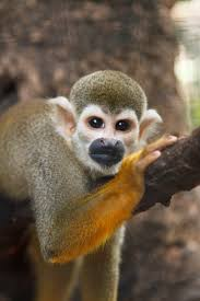 Tennessee wild animals images Rainforest adventures discover zoo sevierville tennessee jpg