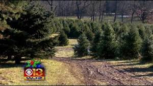 best places to cut your own christmas tree in the baltimore area