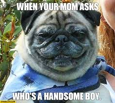 Handsome Meme - when your mom asks who s a handsome boy dog meme starecat com