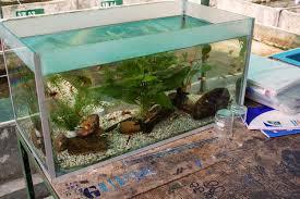 photo tour sri lanka s ornamental fish and center