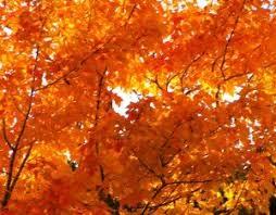 gatlinburg fall colors forecast foliage report autumn 2017