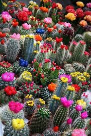 Seeking Cactus Cast 47 Best Cactus Images On Succulents Cacti Garden And