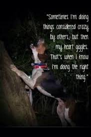 bluetick coonhound song coonhunting coonhunting pinterest beagle dog and