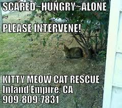 Success Cat Meme - adoption success stories kitty meow cat rescue